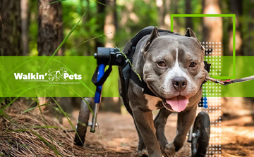 Walkin' Pets boosts conversions by 11% testing TrustedSite certifications against Norton Shopping Guarantee